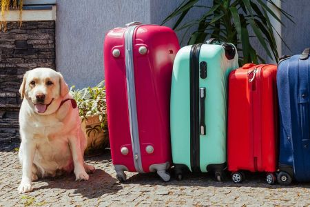Animais de estimação em aviões: dicas e regras para o transporte de cães e gatos